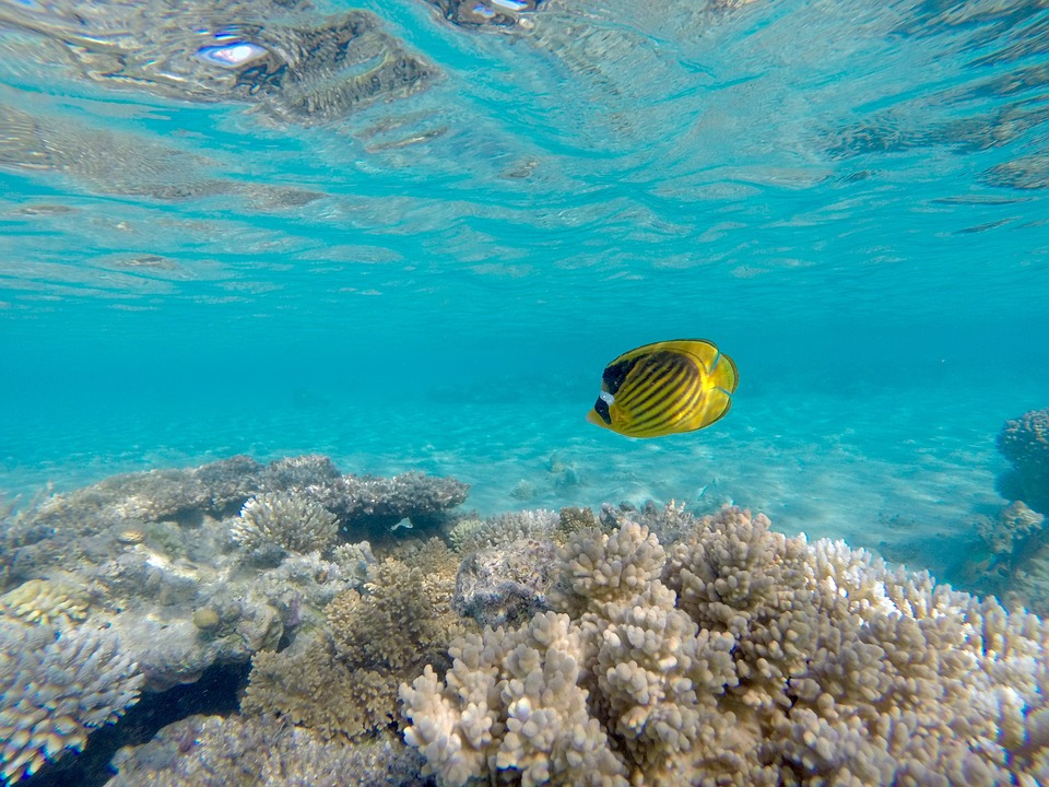 Snorkeling Tour to Giftun island from safaga port