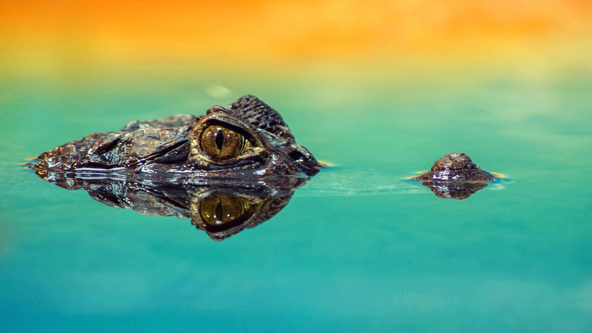 Meet Nile Crocodiles special tour